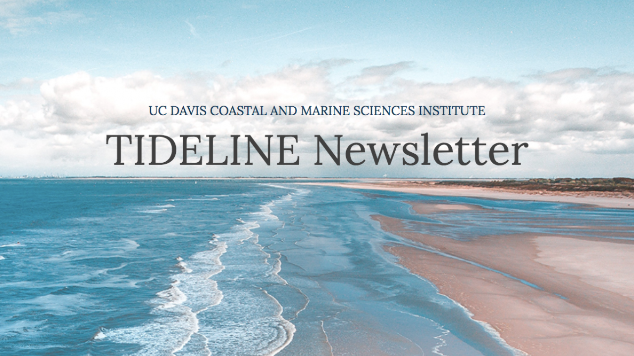 Spring Issue of the CMSI Tideline